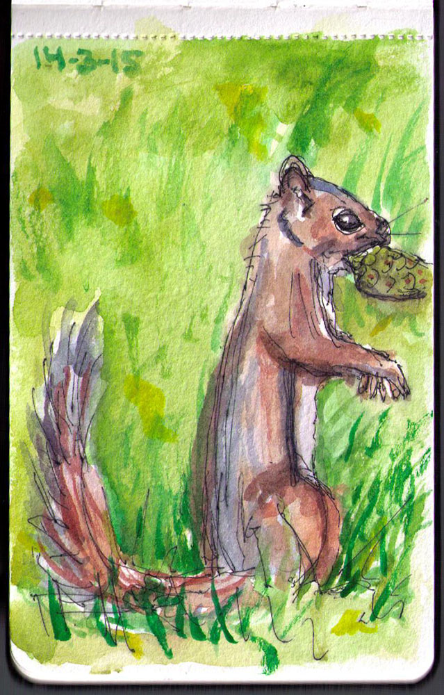 Chipmunk in pen and watercolor after photo by Victor Rakmil