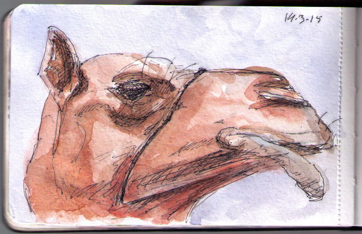 Drawing of a camel in pen and watercolor
