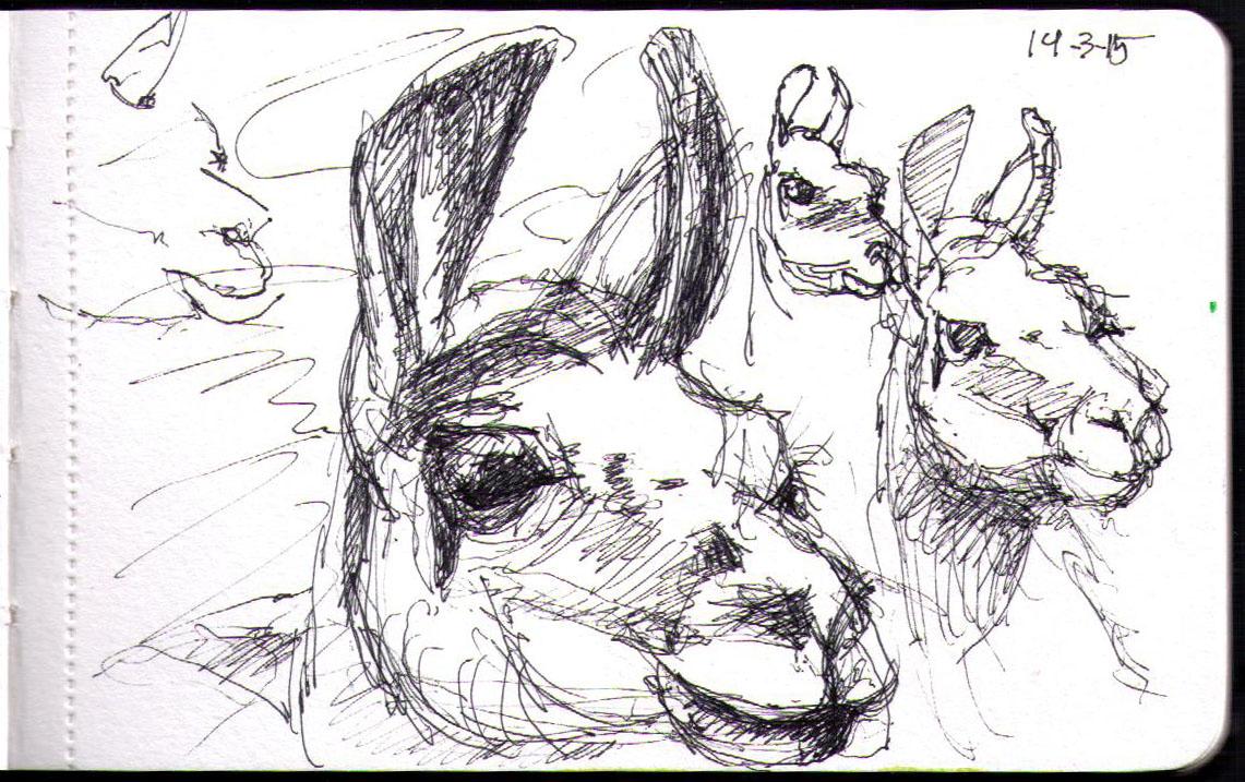 Llamas in Gdansk
