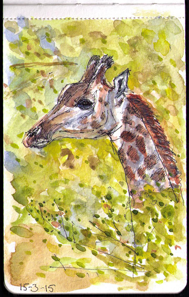 Drawing of Giraffe in pen and watercolor