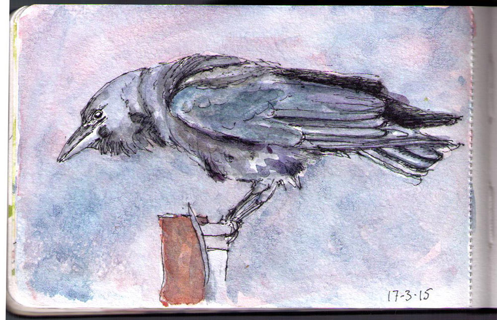 Drawing of a crow in ballpoint pen and watercolor