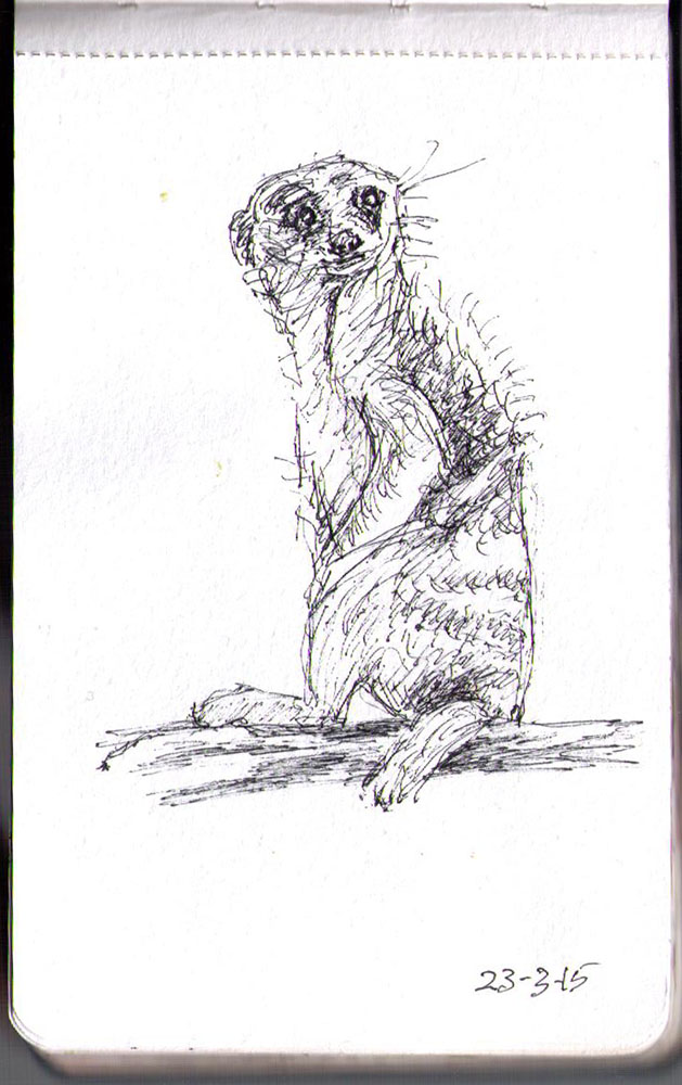 Drawing of a meerkat in ballpoint pen