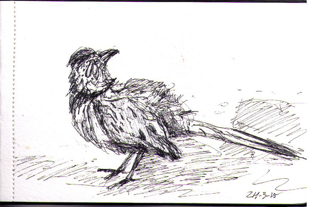 Drawing of a bird in ballpoint pen