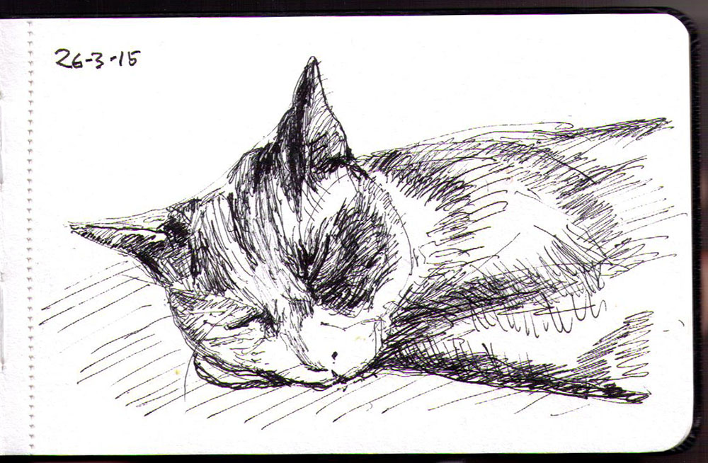 Drawing of a cat named oliver sleeping