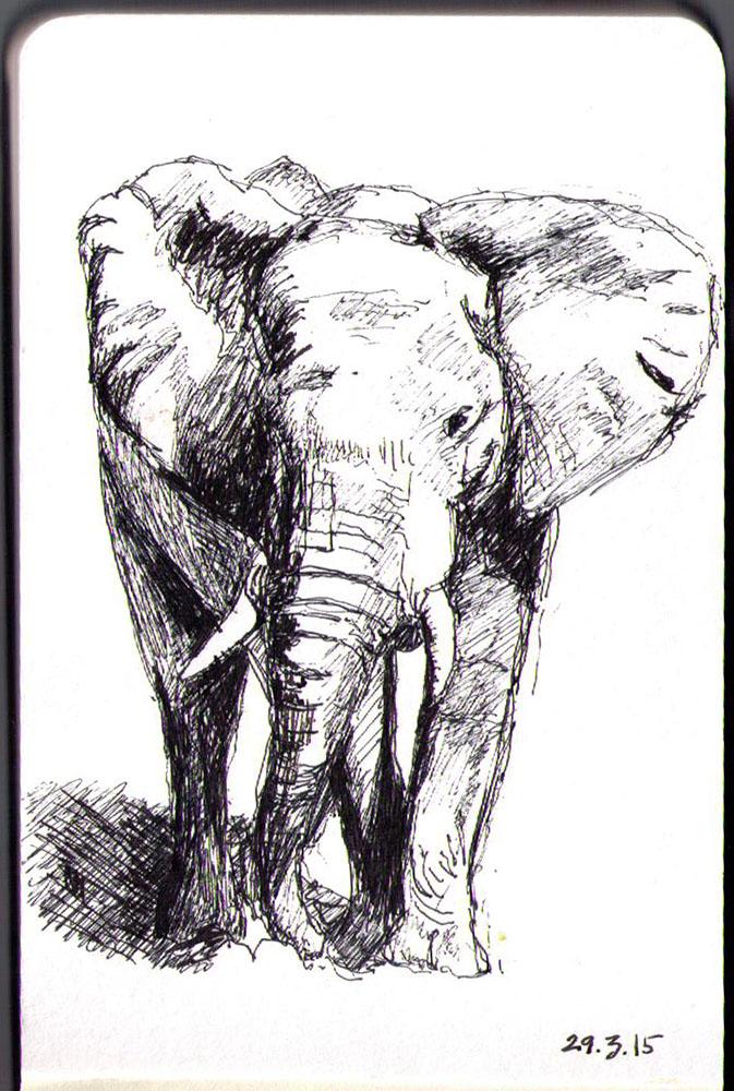 Drawing of an elephant in ballpoint pen
