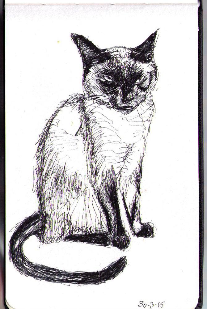 Drawing of a siamese cat named Shoko