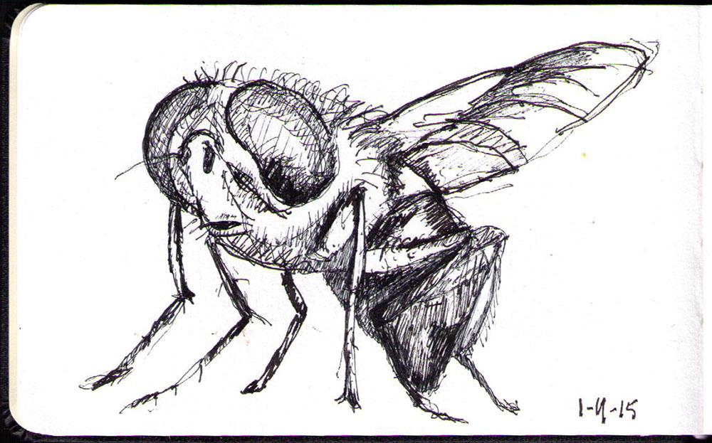 Drawing of a fly in ballpoint pen