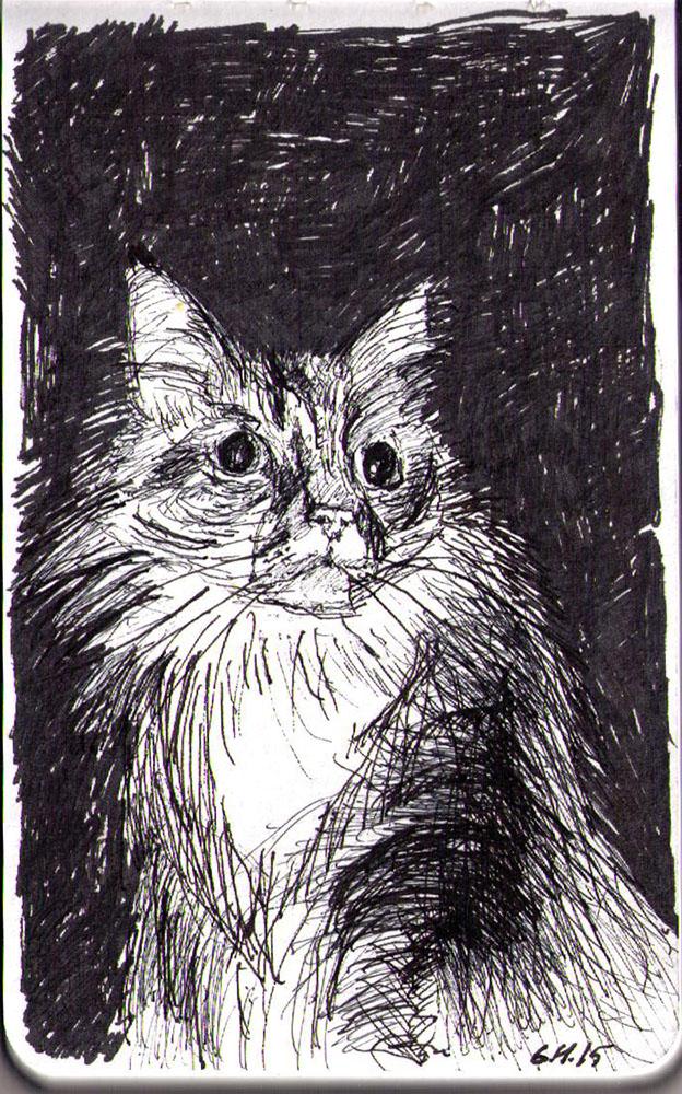 Sketch of a cat called Dezi in ballpoint pen