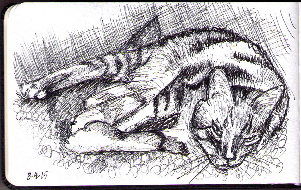 Ink drawing of Sammy the cat