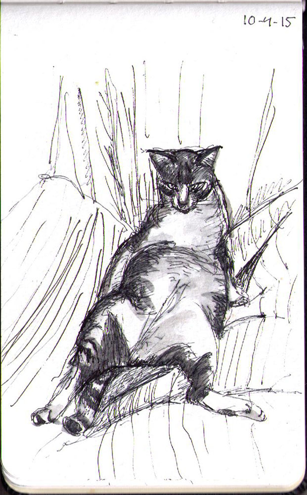 Drawing of a cat called Flynn belly up ballpoint pen