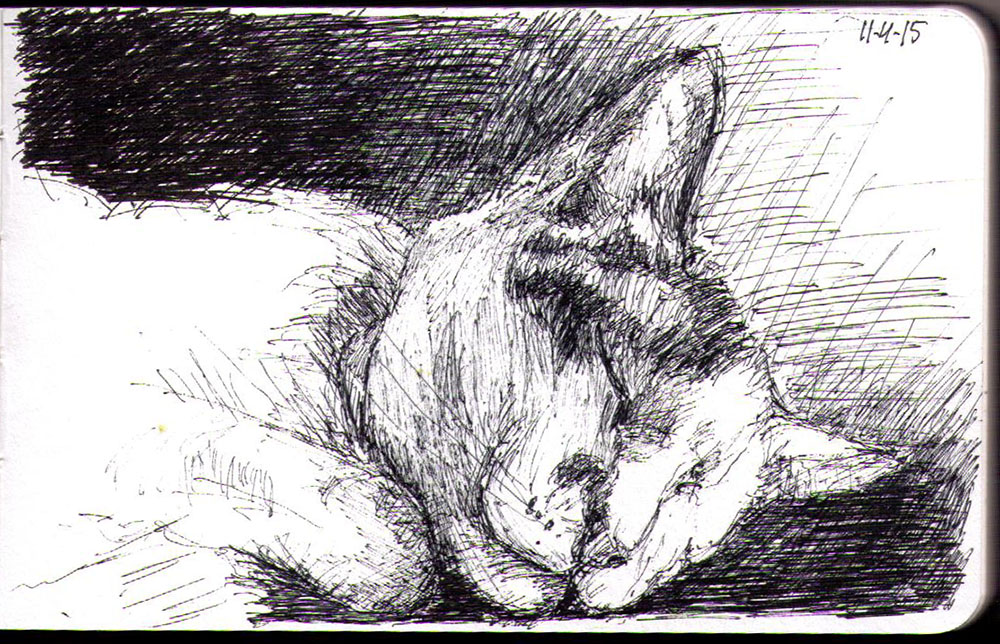 drawing A cat called Lily Olivia sleeping