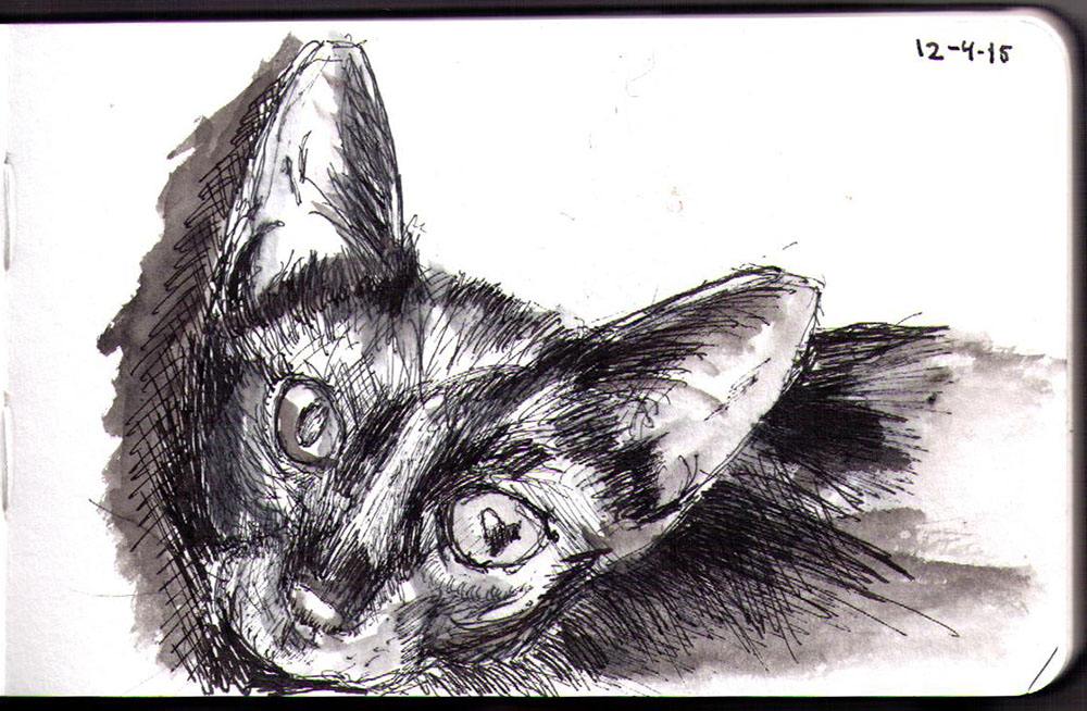 Drawing of Purrince Siddhartha the cat in ink and ballpoint pen