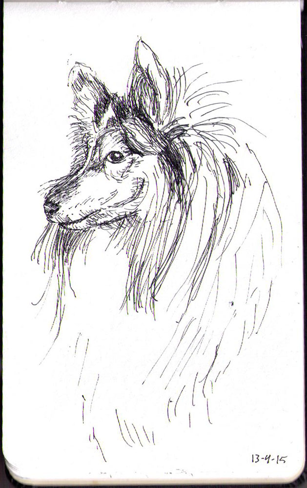Sketch of Dakota, the shettland sheep dog