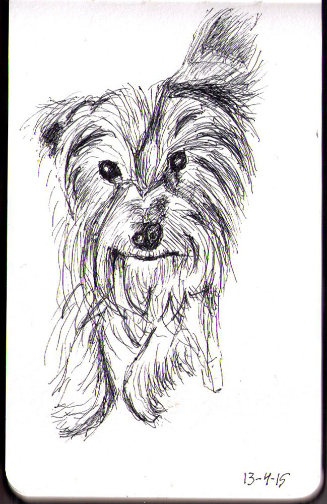 Sketch of Houdini the Yorkshire terrier dog