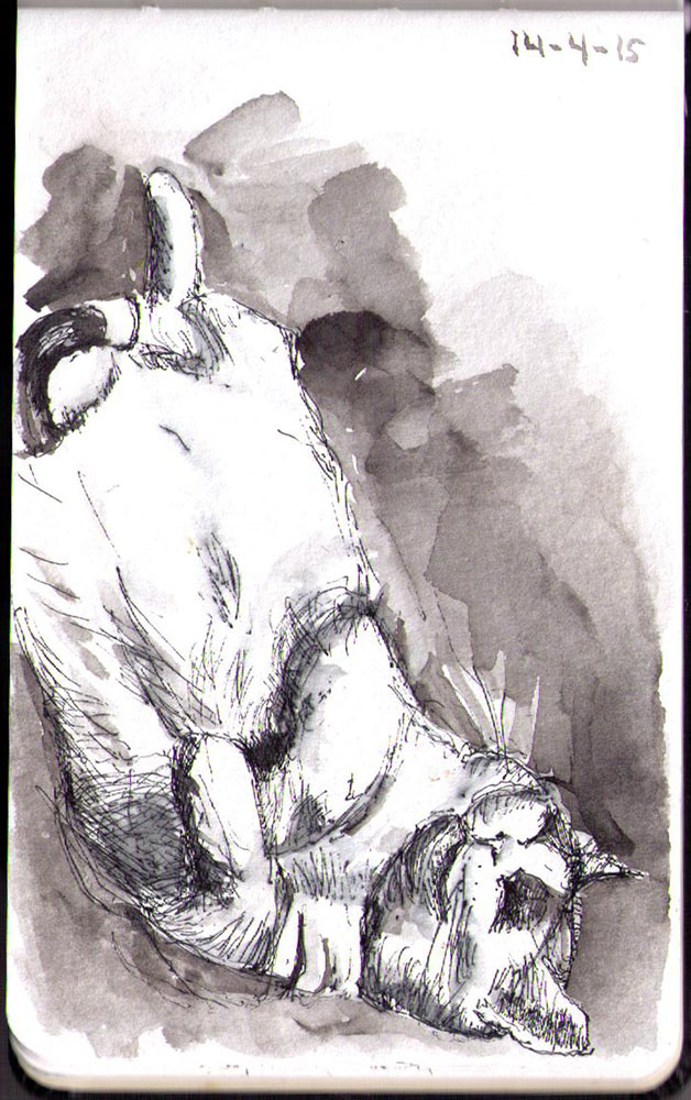 Binky. A cat drawing in ballpoint pen and India ink