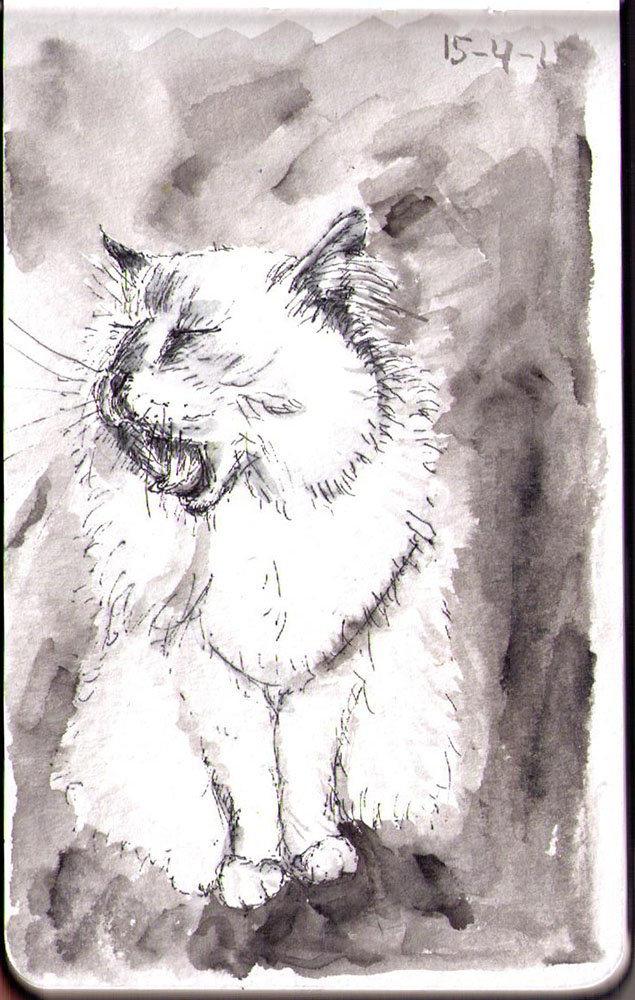 Ellie the cat. Sketch in pen and india ink