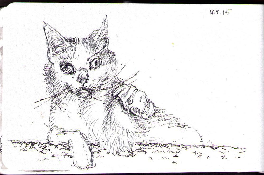 Sleepy cat called phoebe. Drawing in ballpoint pen