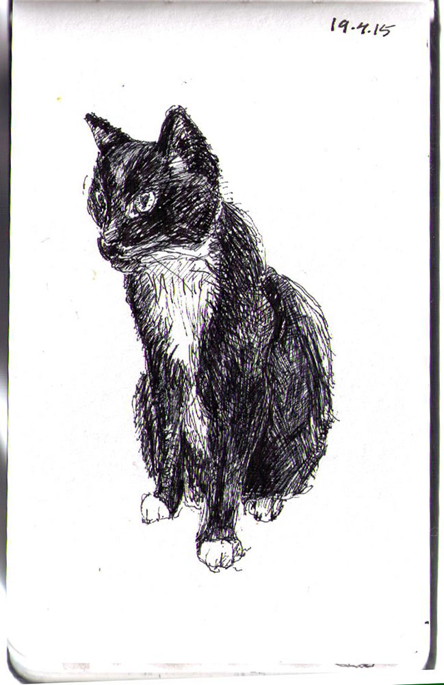 Drawing of Austin the cat in ballpoint pen