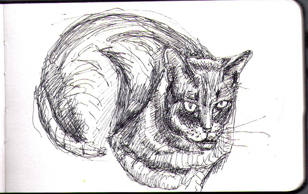 Sketch of Cody the cat in ballpoint pen