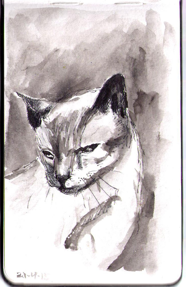Sketch of Merlin the Siamese Cat in india ink and ballpoint pen