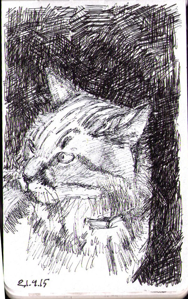Drawing of a cat called Newton in ballpoint pen
