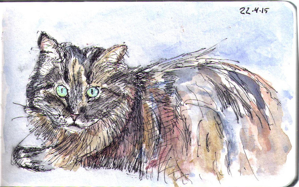 Cat sketch of Zoey in ballpoint pen and watercolor