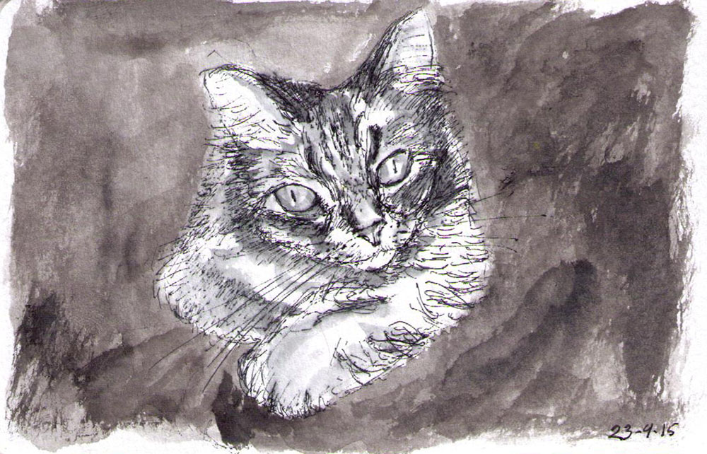 Sketch of a cat called Stitch in india ink and ballpoint pen