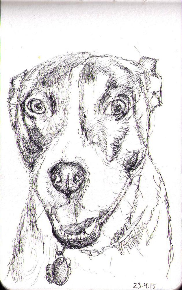 Sketch of a dog belonging to Jennifer Grover in ballpoint pen