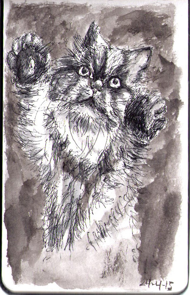 Drawing of a cat called Trinny in ballpoint pen and india ink
