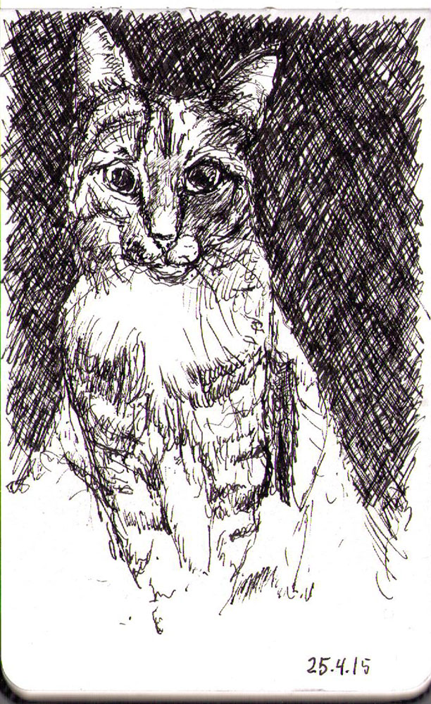Drawing of a cat called Delilah in ballpoint pen