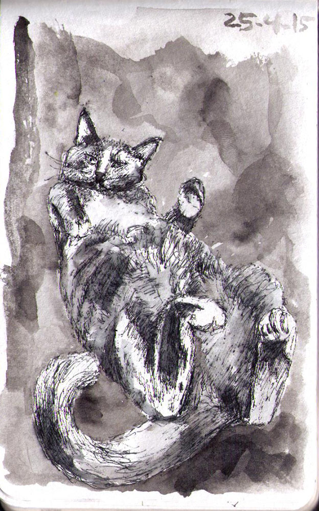 Drawing of a cat called Savannah in ballpoint pen and india ink