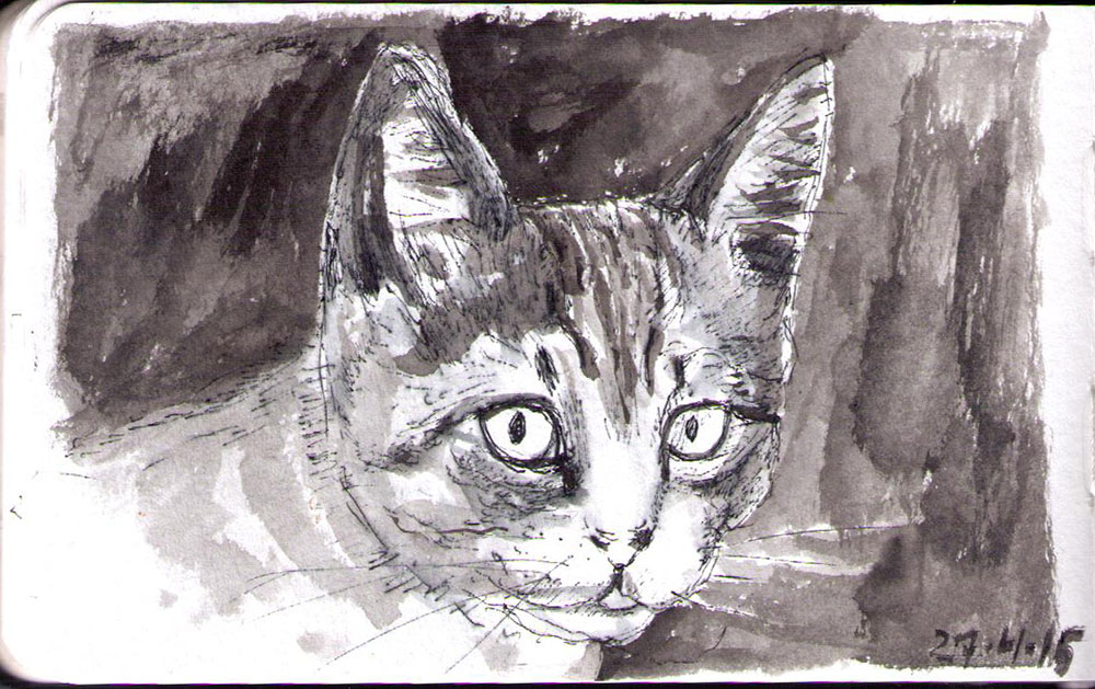 Quirky the blind kitten. Drawing in ballpoint pen and india ink