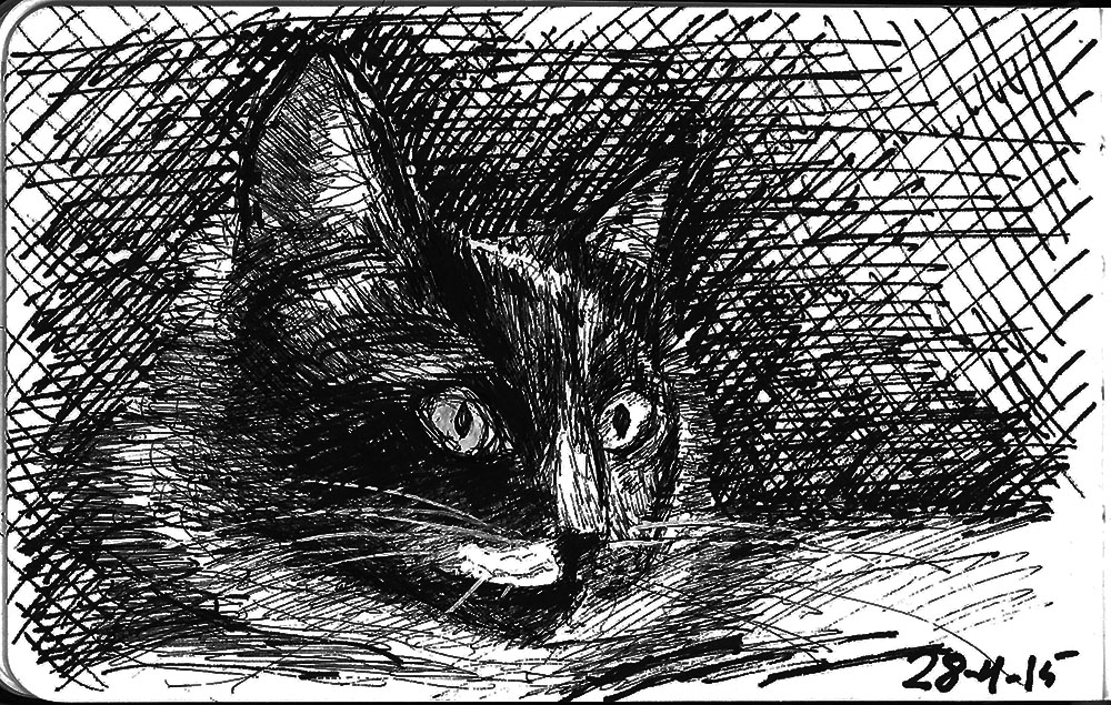 Sketch of a cat called Katie Isabella in ballpoint pen