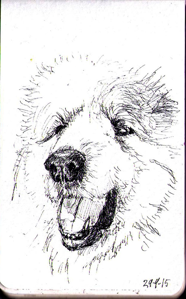 Drawing of a dog called Clowie