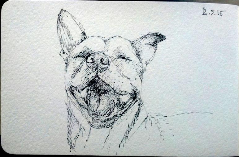 Sketch of Landshark the dog in ballpoint pen