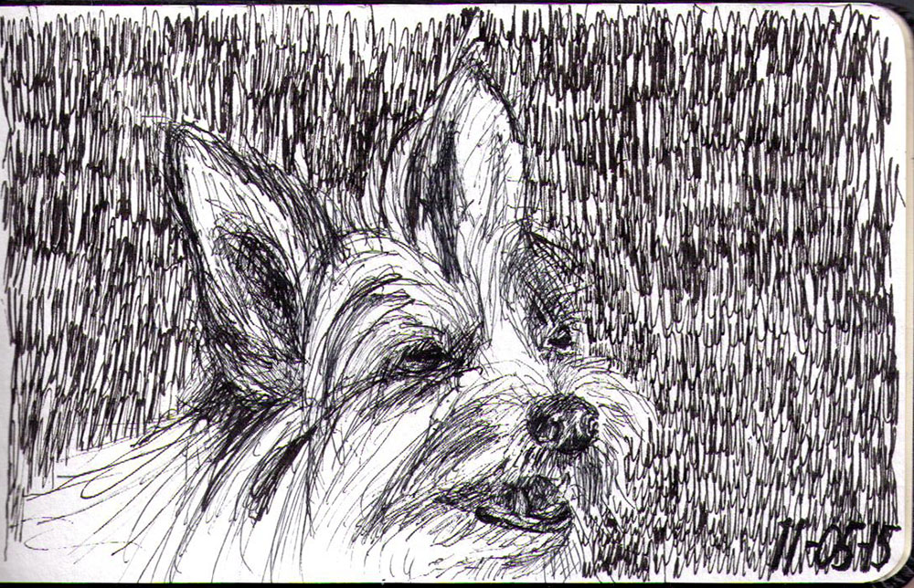 Sketch of a dog called duffy in ballpoint pen