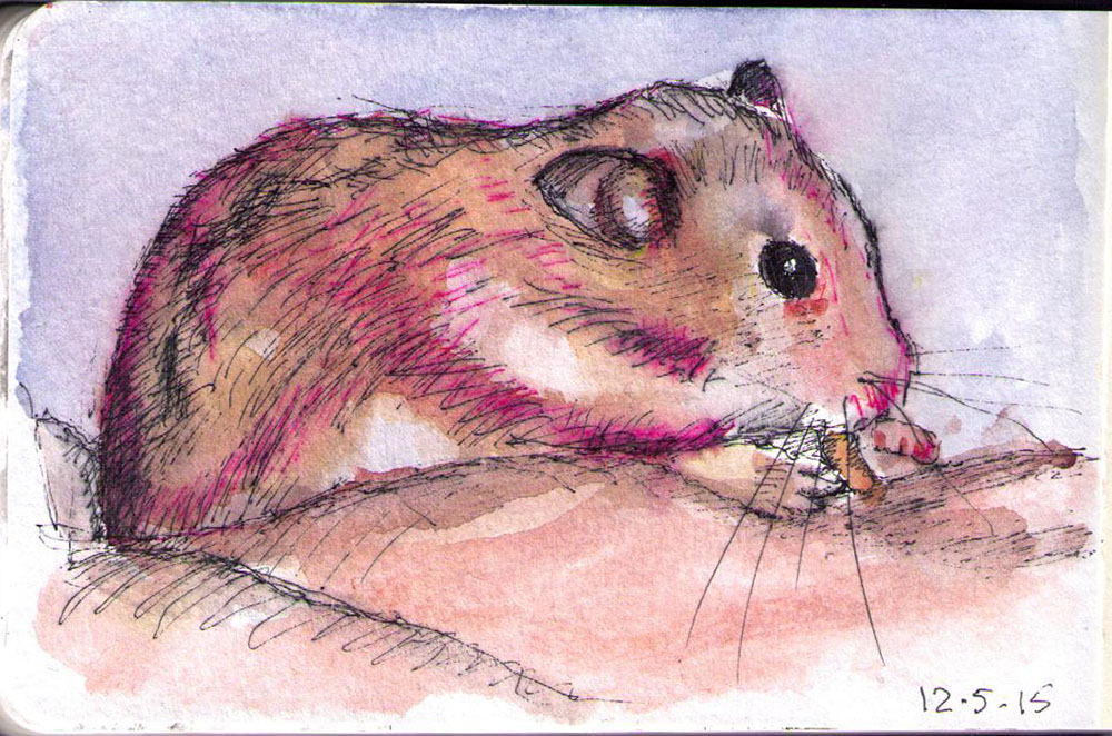 Sketch of a hamster in a hand drawn in ballpoint pen and watercolor