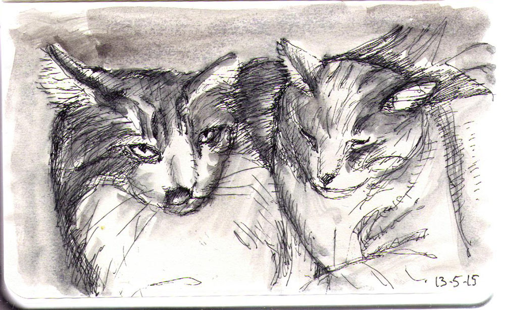 Two cats called Oliver and Calvin sketched in ballpoint pen and india ink