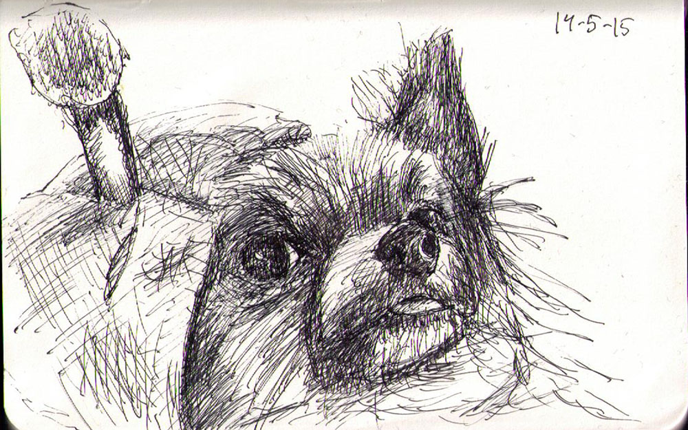 Drawing of Thumber the dog disguised as a bumblebee. Ballpoint pen