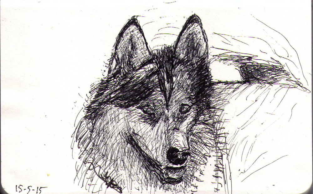 Misaki the dog, drawing in ballpoint pen