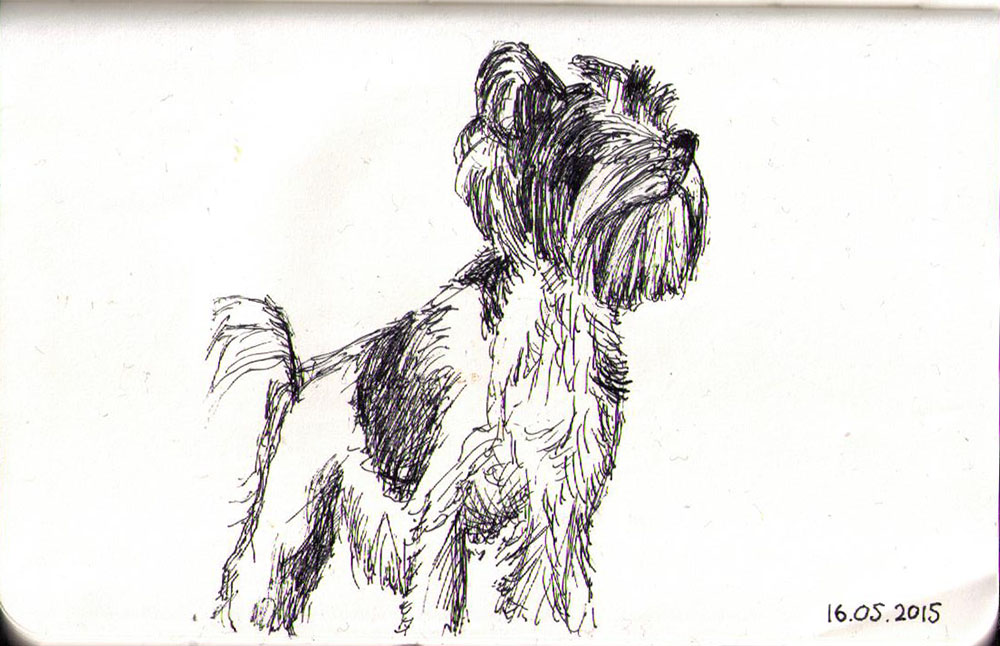 A little dog called Mocha. Sketch in ballpoint pen