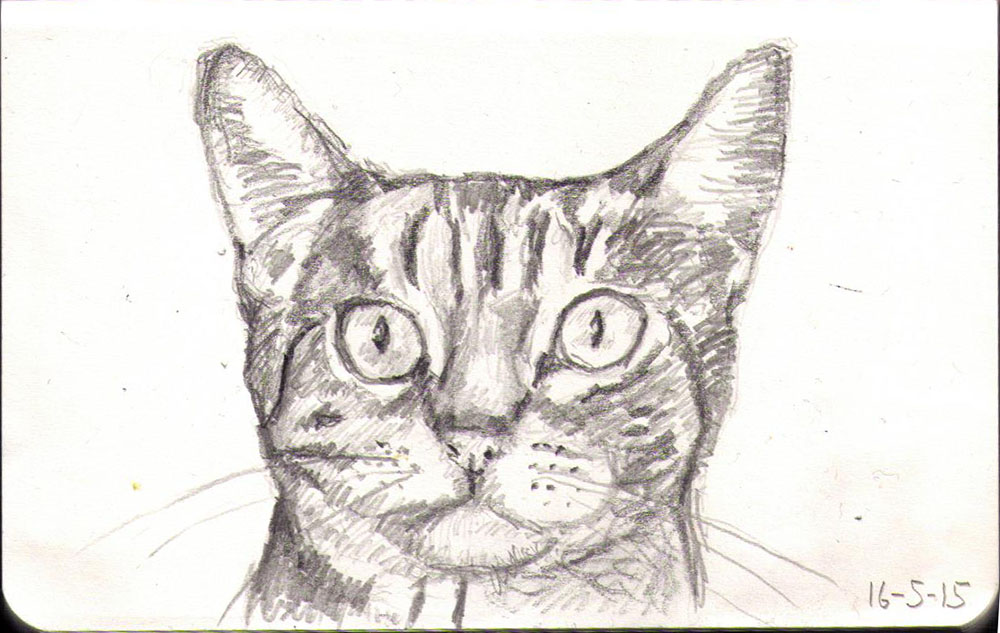 Pencil drawing of a cat called Tumble