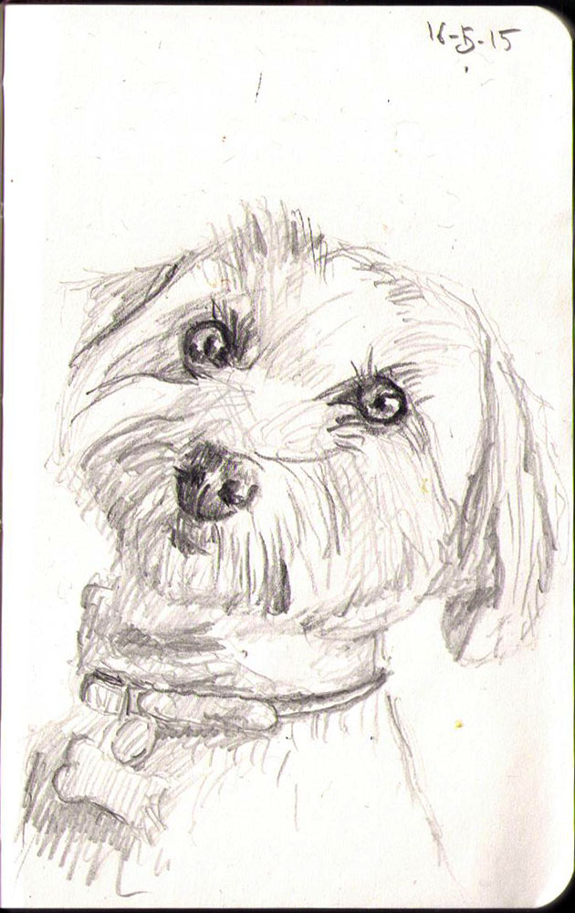 Drawing of a dog called Logan in pencil