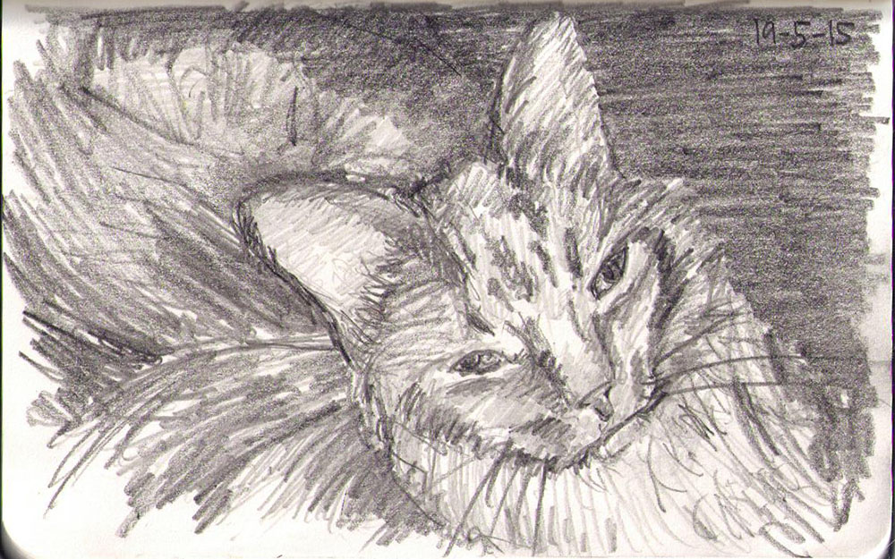 A cat called BearBear sketched in pencil