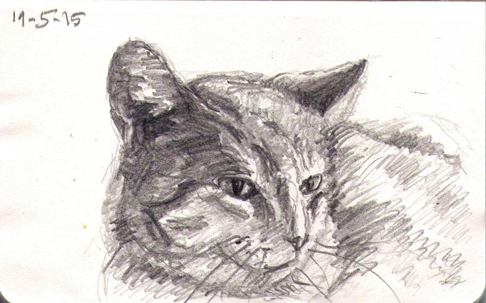Drawing in pencil of a cat called Casper