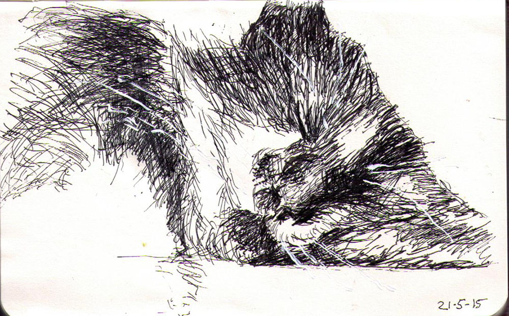 Drawing of a sleeping cat called Bailey in ballpoint pen