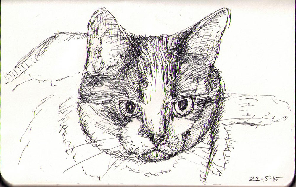 Cat called Pryncess. Drawing in ballpoint pen