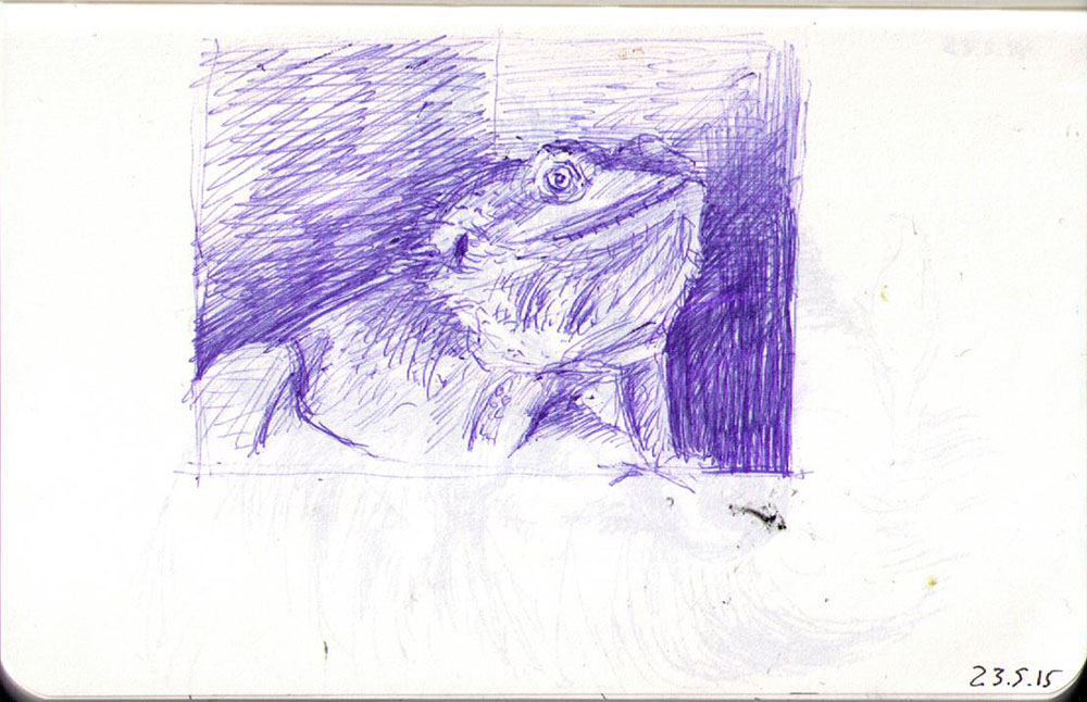 Drawing of Draco the lizard in ballpoint pen