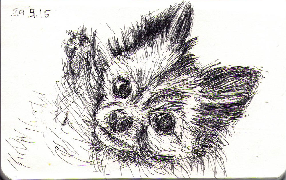 Drawing of a little dog called Cleo in ballpoint pen