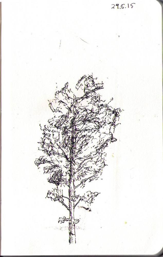 thomas-dalsgaard-clausen-2015-05-24b drawing of a birch tree in ballpoint pen